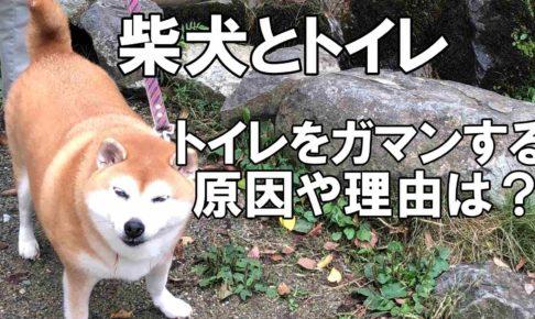 柴犬アイキャッチ画像